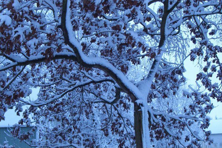 Winterimpression Tostedt 2001